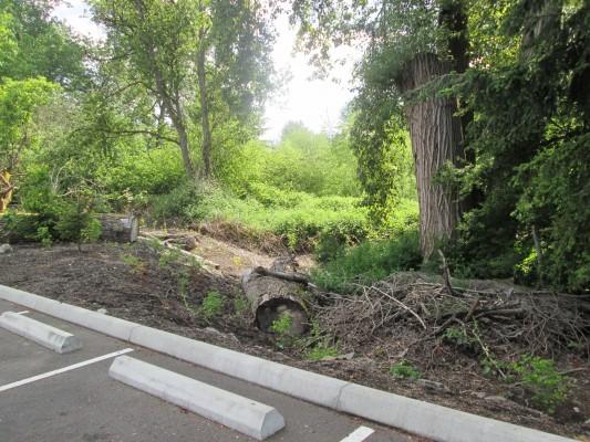 Restored Wetlands Behind Plaza 221