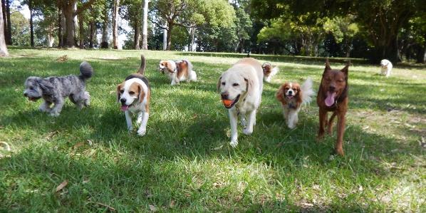 Walk 'n Wag dog walk